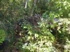 Лесные прогулки за Став