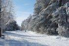 Зимняя рапсодия