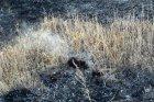 С места пожара в Тополёвке