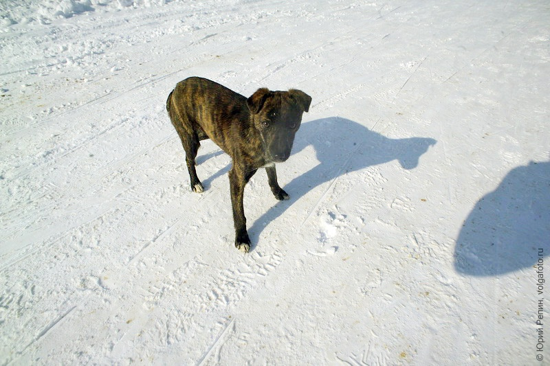 Саратовская лыжня