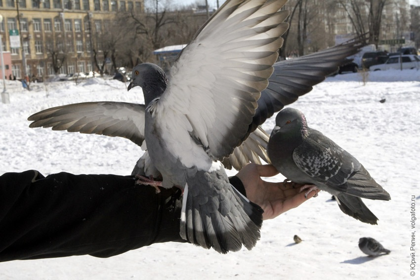 Голуби сквера Пушкина