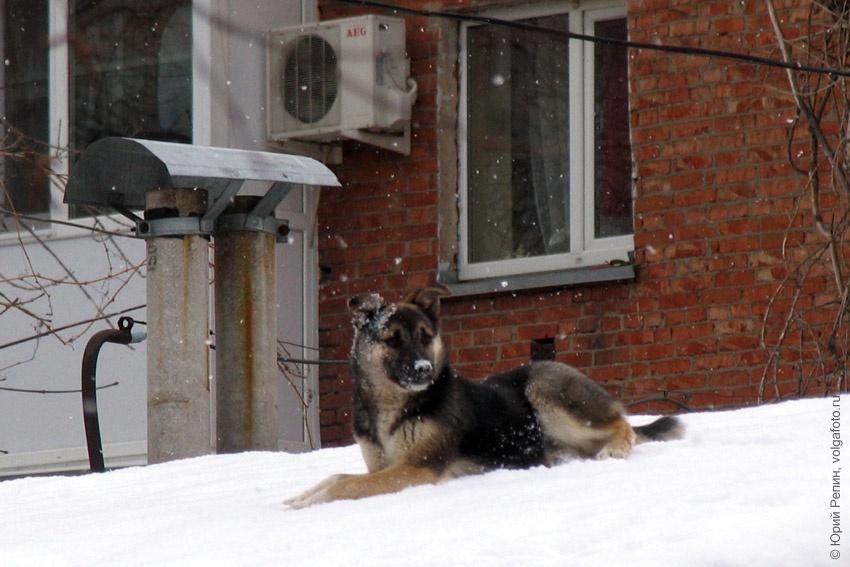 Собака высотница