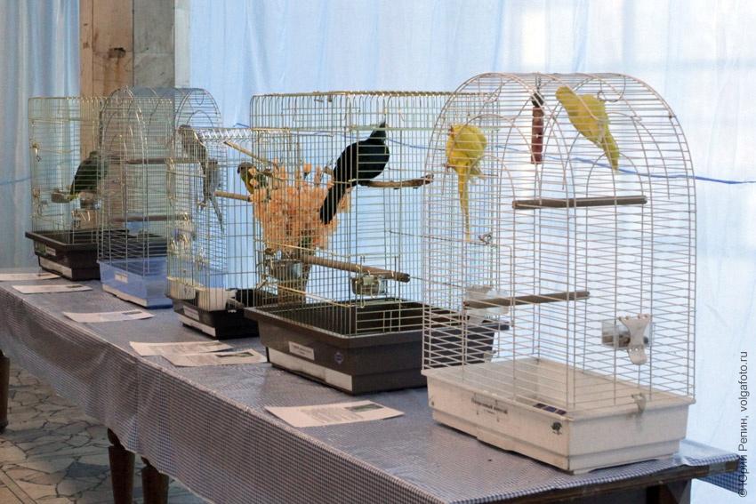 Попугаи и не только