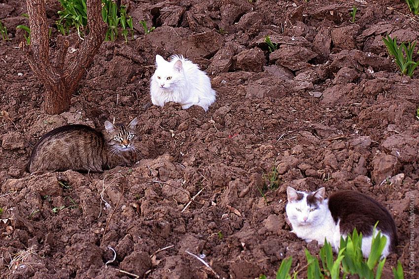 Весенние коты