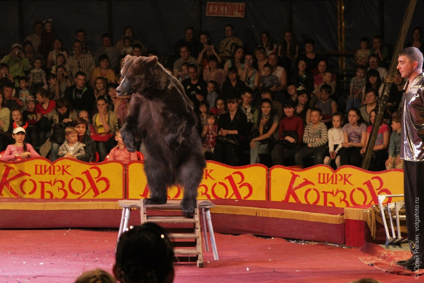 Цирк шапито Кобзов