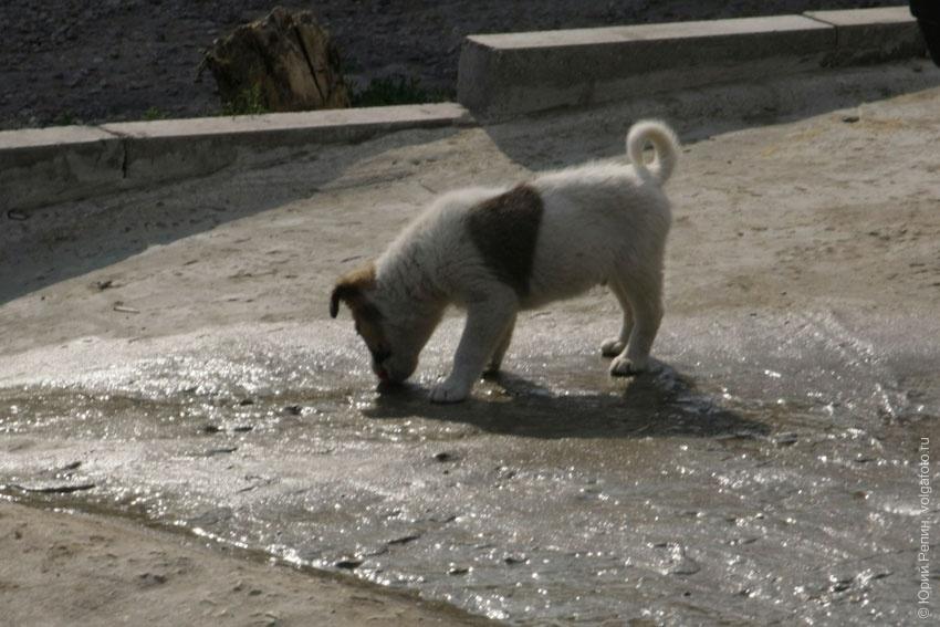 Собачья жизнь