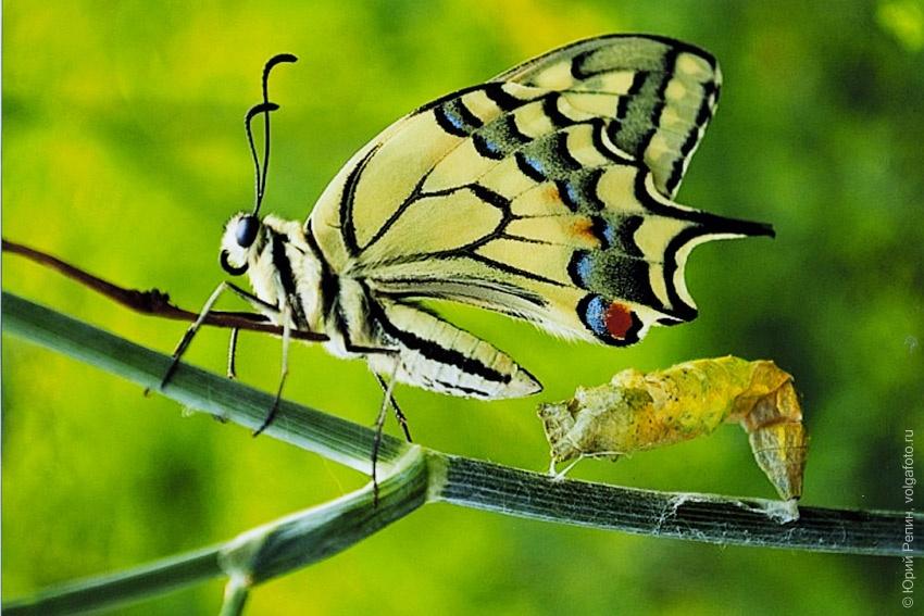 Гармония природы 3