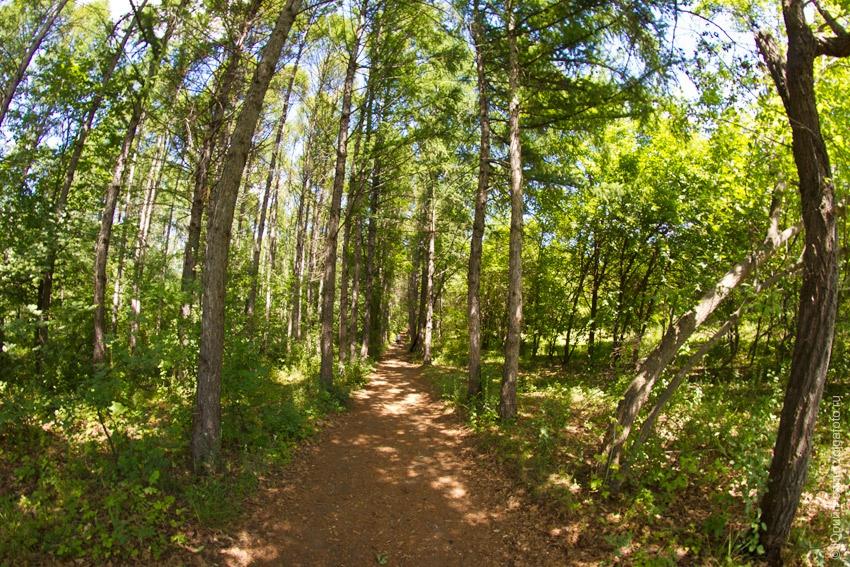 Ставский лес