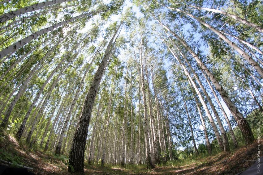 Тайны Ставского леса